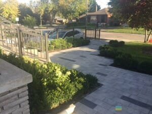 landscaping contractor tips about shrubs
