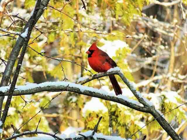 buckthorn | Bird | Go life